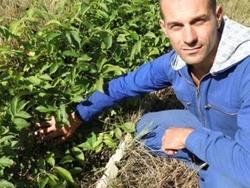 Требуется инвестор для расширения лесо-садового питомника