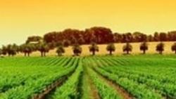 Инвестор в выращивание винограда
