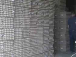 Производство яичного лотка для птицефабрик