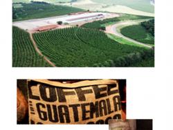 Инвестор в плантацию по выращиванию кофе в Гватемале